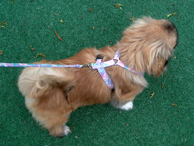purple, pink and blue floral harness and matching leash