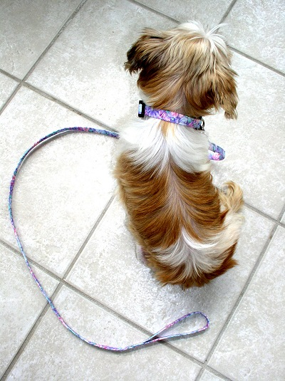 Mona wearing the pink & purple floral collar and leash