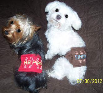 Mr. Pipps and Simon Rogers - Peke  A Tzu Patrons